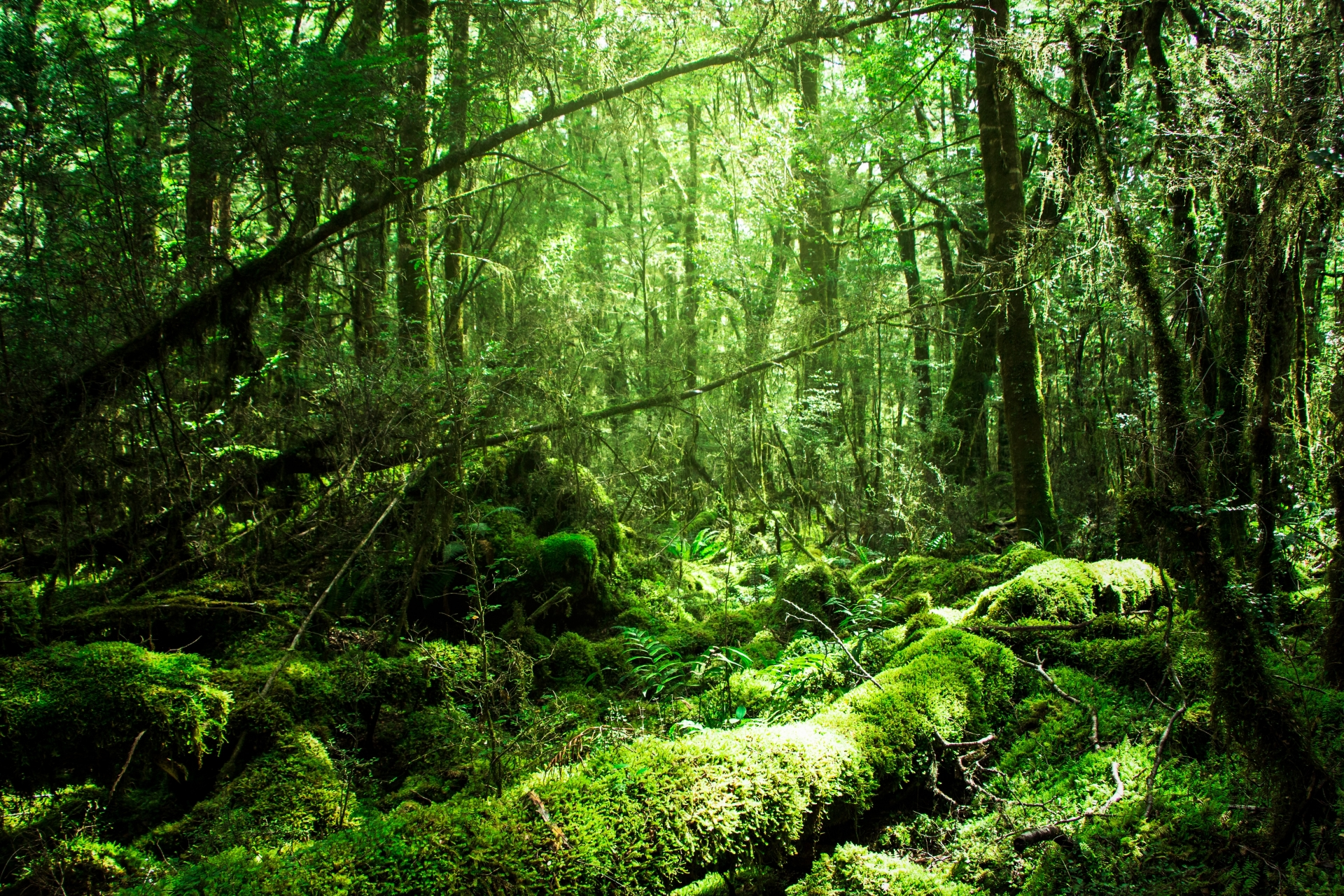 鎮守の森・記憶の森について